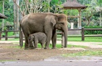Elephant son and elephant mom